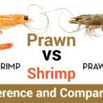 Prawns Vs Shrimp