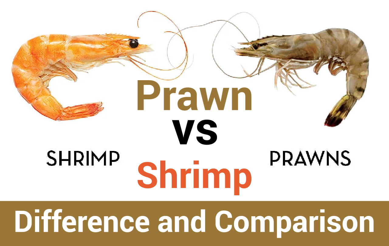 Prawn vs Shrimp – Difference and Comparison